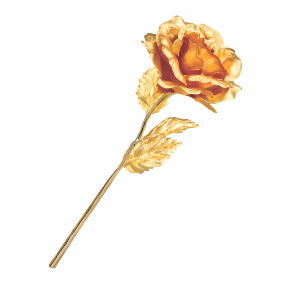 Open Rose lohiyasgalleria